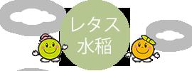 レタス・水稲