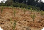 農業所得向上対策支援事業